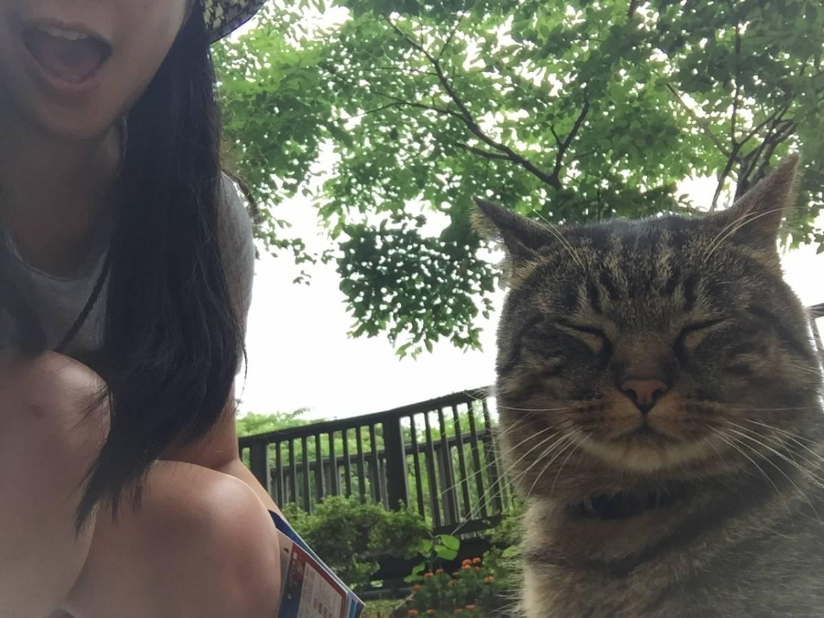 東京的江之島以神社聞名,島上不但有不同大大小小的神社外,著名的青銅鳥居更是日本的世界文化遺產之一,亦吸引不少遊客的前往。但若果你也是愛貓之人,島上的貓主子必定是吸引大家去的最大目的。 從東京新宿出發,前往江之島只是花大約一個小時的車程,就可以到達江之島站。出了地鐵後,可以先到當地的旅遊詢問處索取資料,有一位年紀較大的婆婆及一位年輕女士解答大家問題,國語及英語的溝通完全沒有任何問題啊。經過詢問處,穿過地下隧道,便可以看見連接著江之島的大橋,江之島的尋貓之旅亦可以宣怖開始。