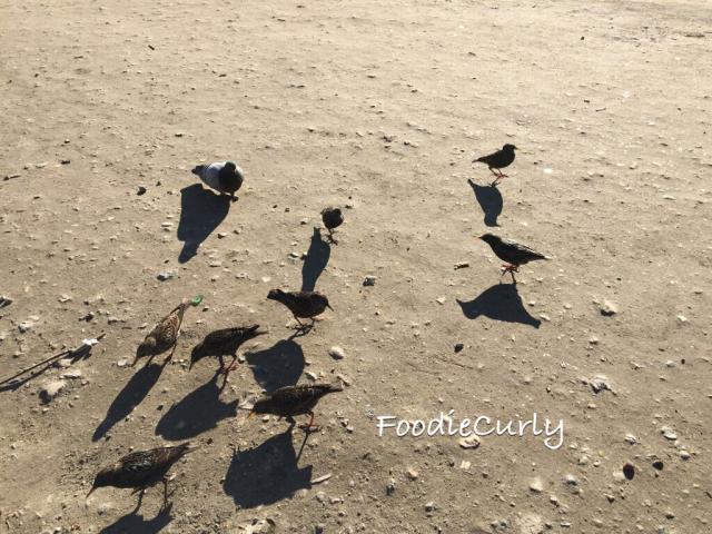 只要拋下麵包碎,就會引來一群雀鳥覓食。