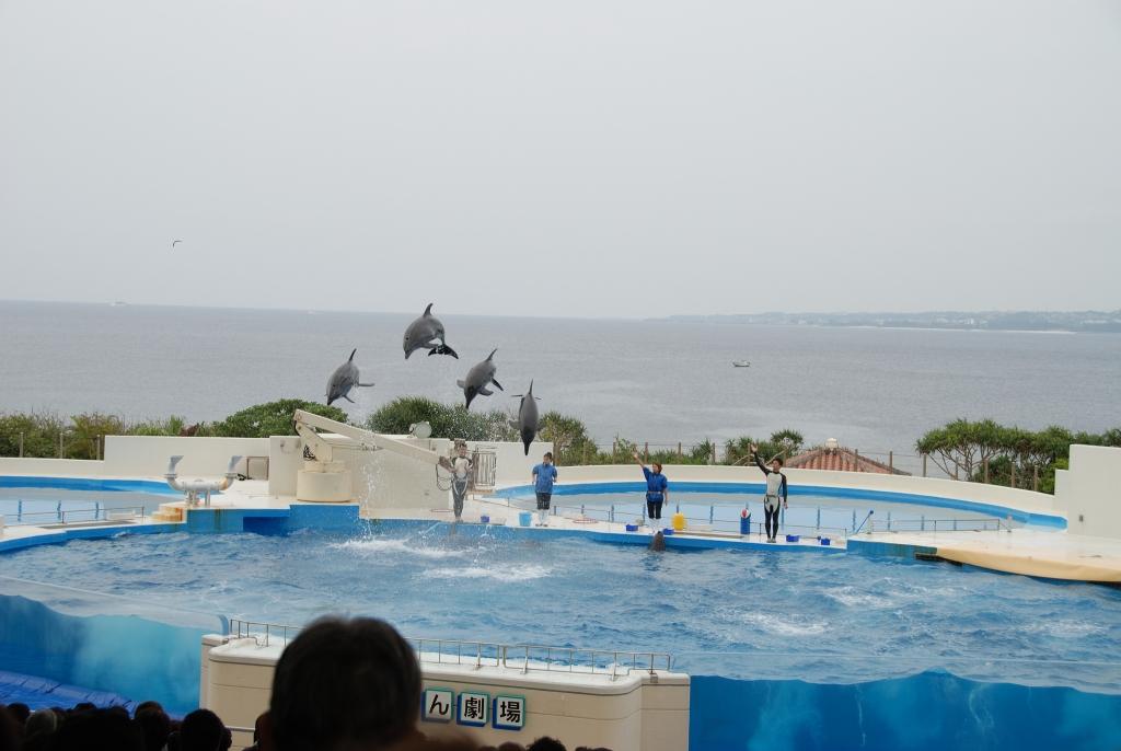 2012年2月 冲绳岛 (第22集) 海洋博公园 (day 3)