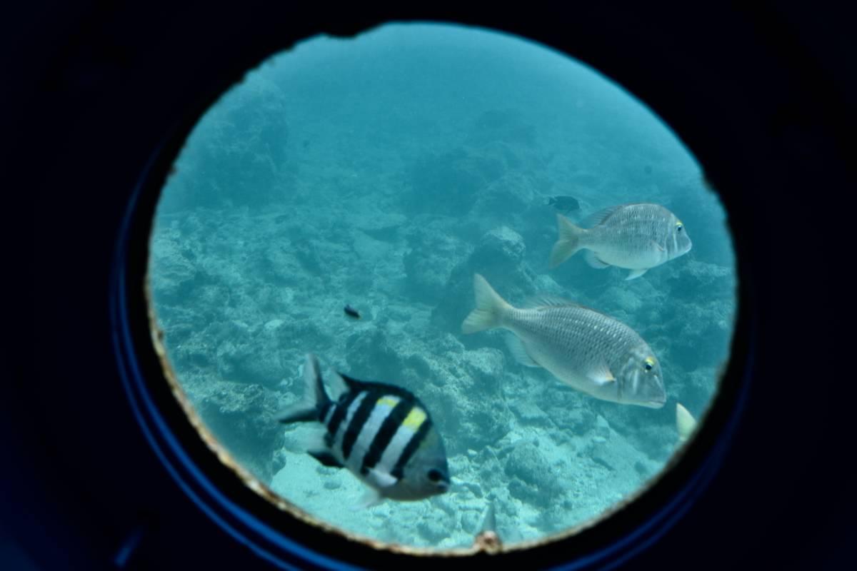 半潜水艇  上次第一次到冲绳旅程的网址: [2012年2月的冲绳岛
