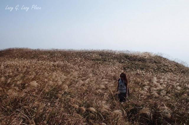 秋冬來香港一定要看看美麗的芒草海