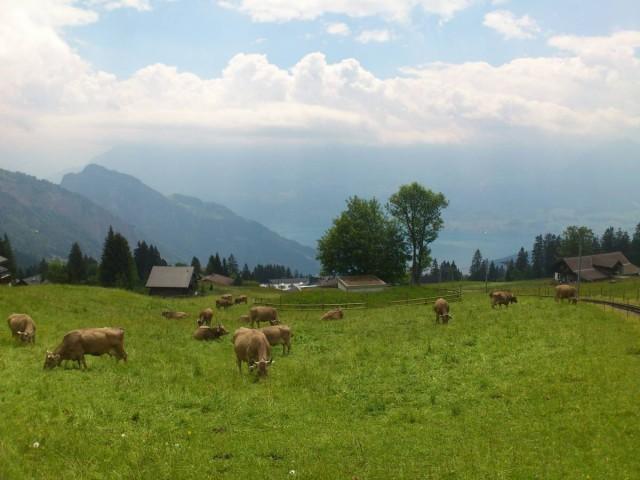 好阿爾卑斯山feel呀!