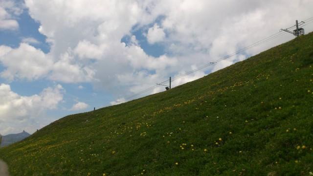 小黃花漫山遍野