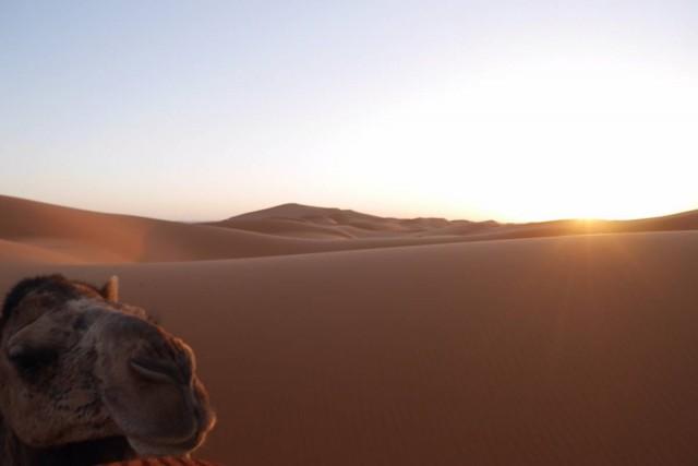 我的乖駱駝