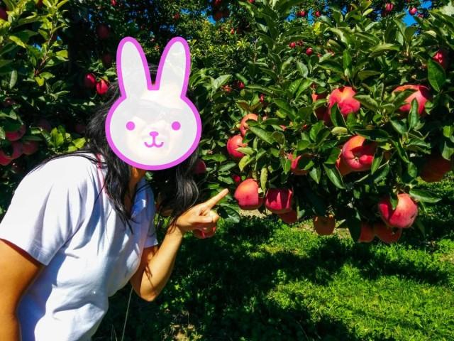Apple-Orchard_Modified_Web_2