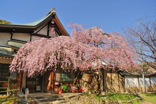 NaraHimuro05
