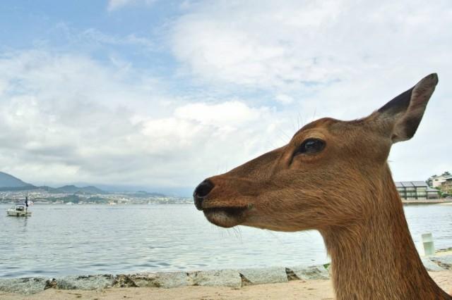 Itsukushima05