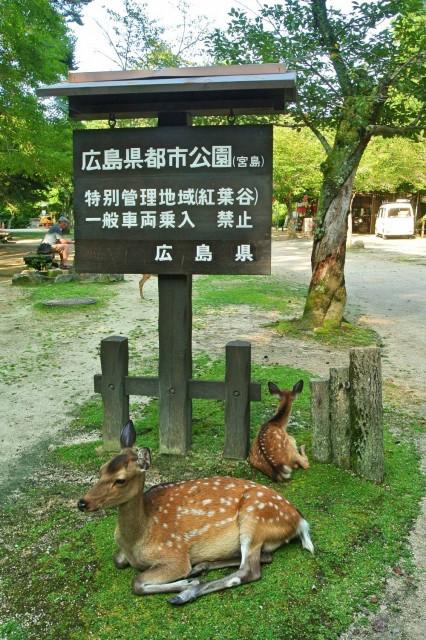 Itsukushima22