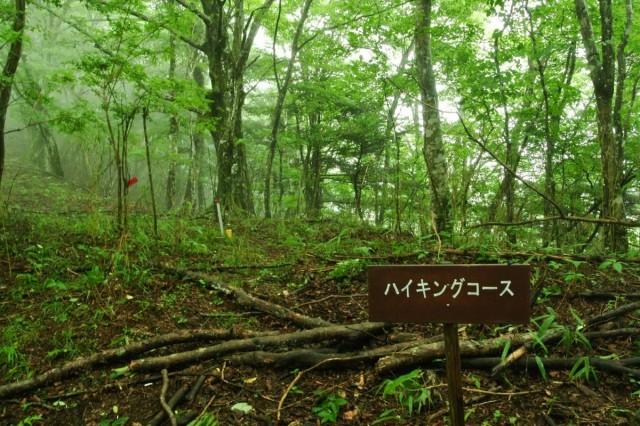 yamanakako_s1007