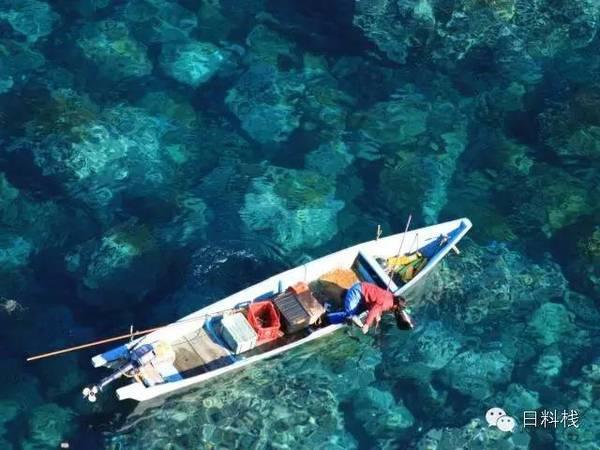 日本的海膽捕撈