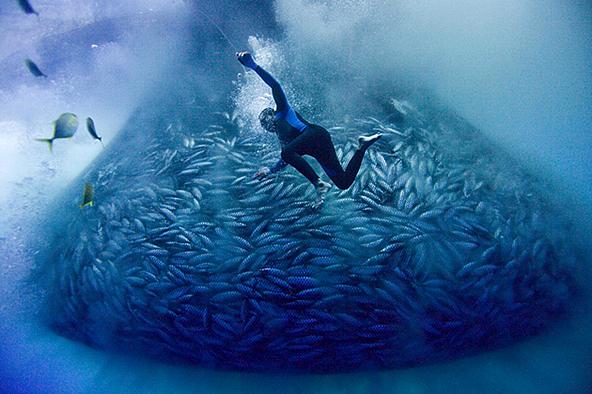 被圈網圍捕的鰹魚群