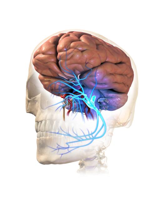 三叉神經痛症情況
