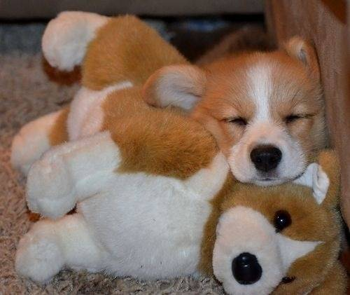 Puppies-Stuffed-Animals-15